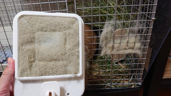 牧草の粉が舞うため、ウサギは赤ちゃんと同じ部屋で飼わない方が良い。