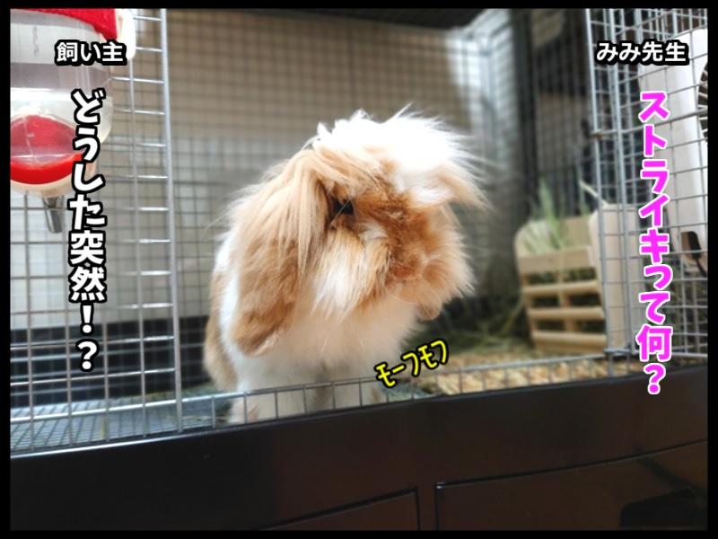 ウサギとネコの写真で4コマ!1コマ目。