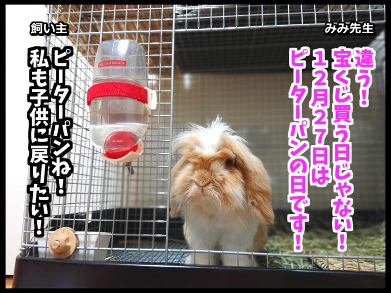 ウサギとネコの写真で4コマ!2コマ目。