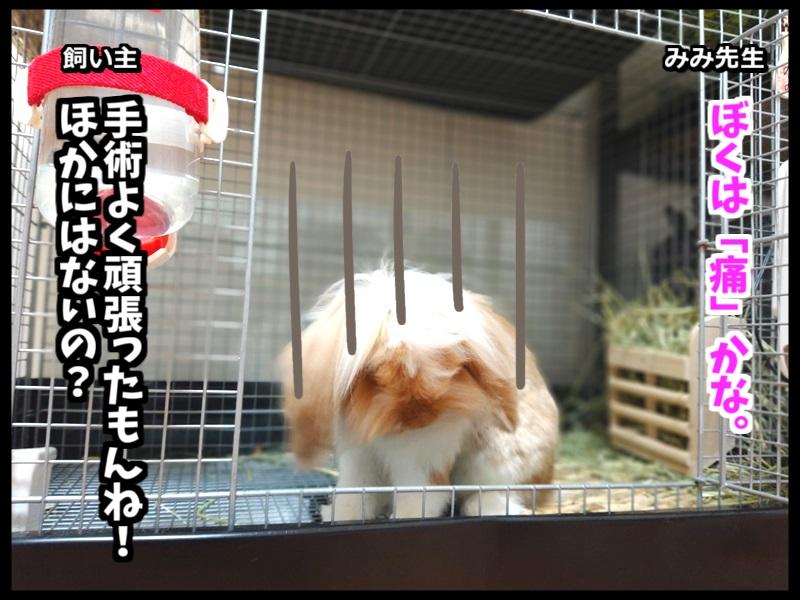 ウサギとネコの写真で4コマ!3コマ目。