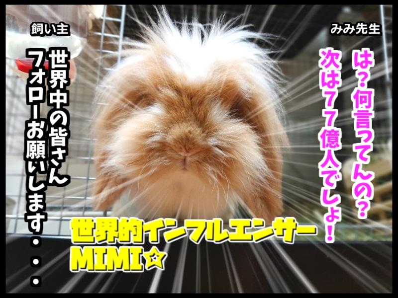 ウサギとネコの写真で4コマ!4コマ目。