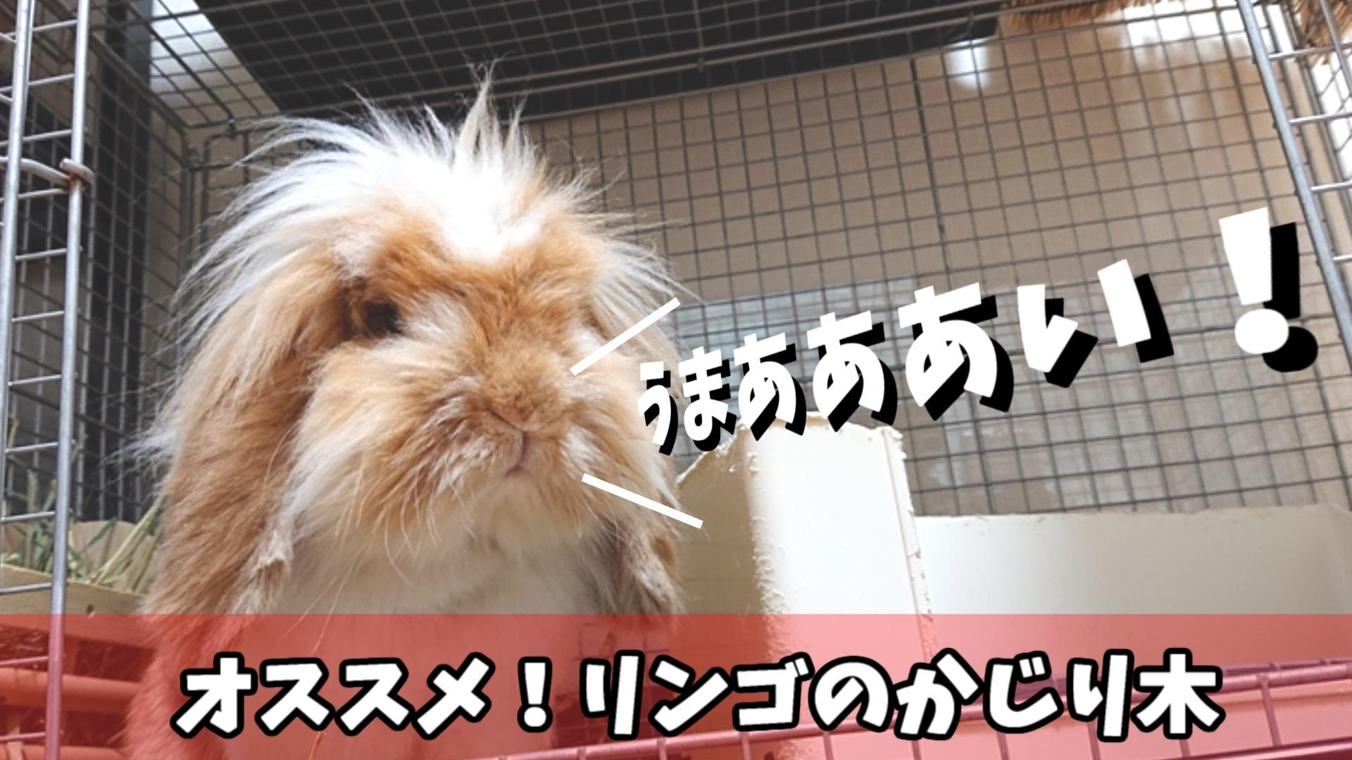 うさぎのかじり木おすすめ3選!