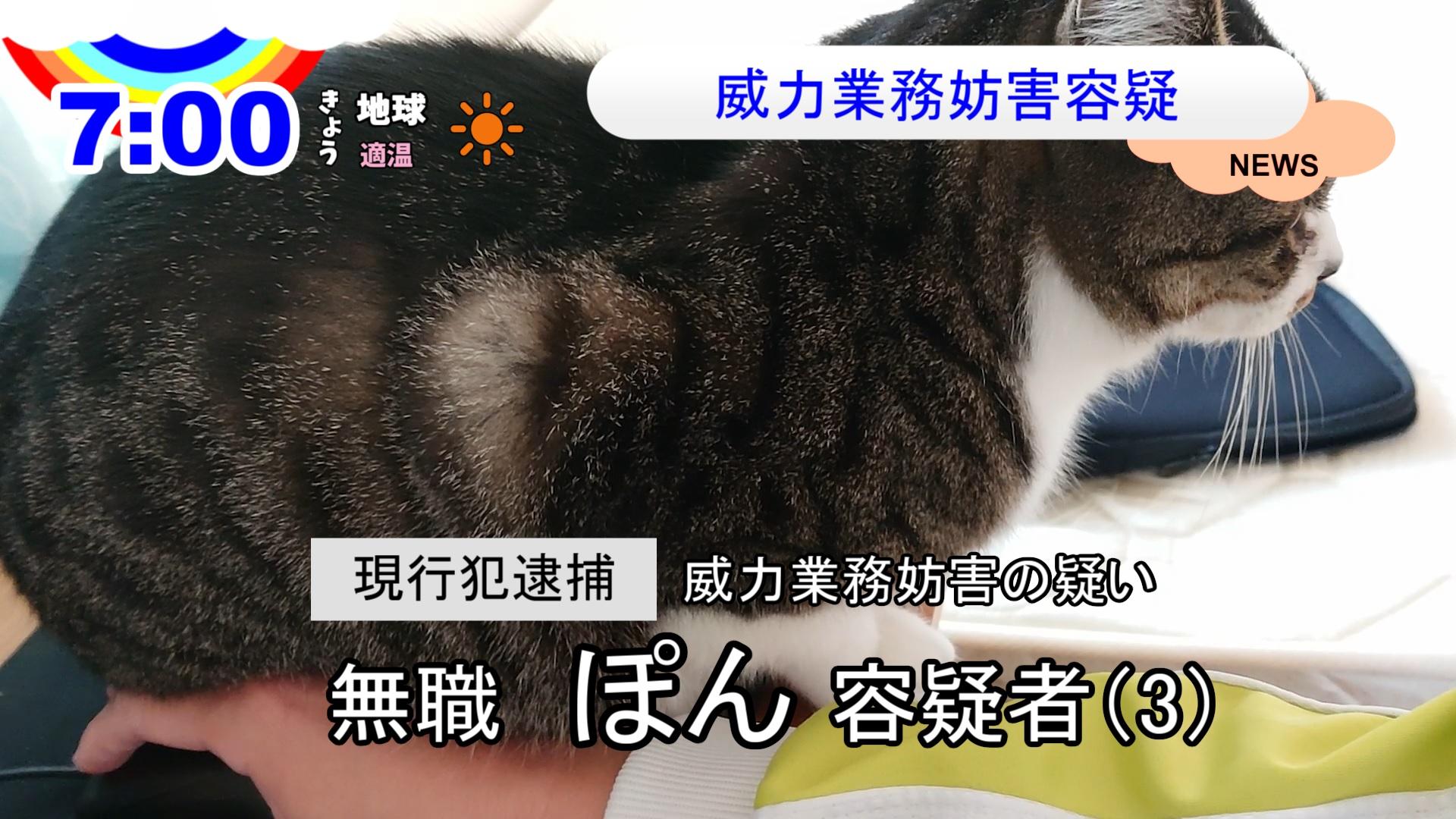 在宅勤務と猫【ニュース動画】