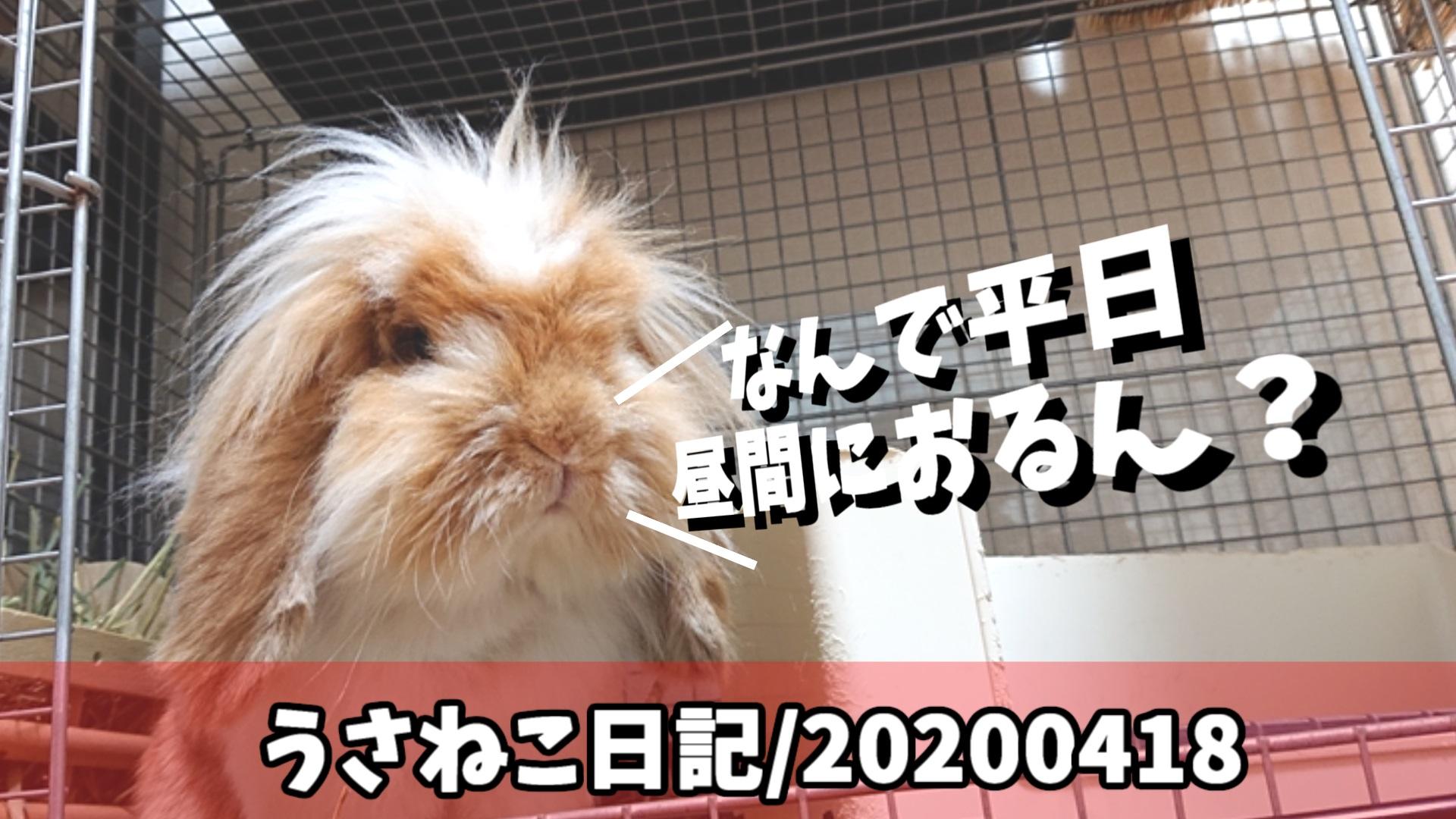 アメファジウサギ「みみ先生」と保護ネコ「ぽんちゃん」の日記/2020年4月18日