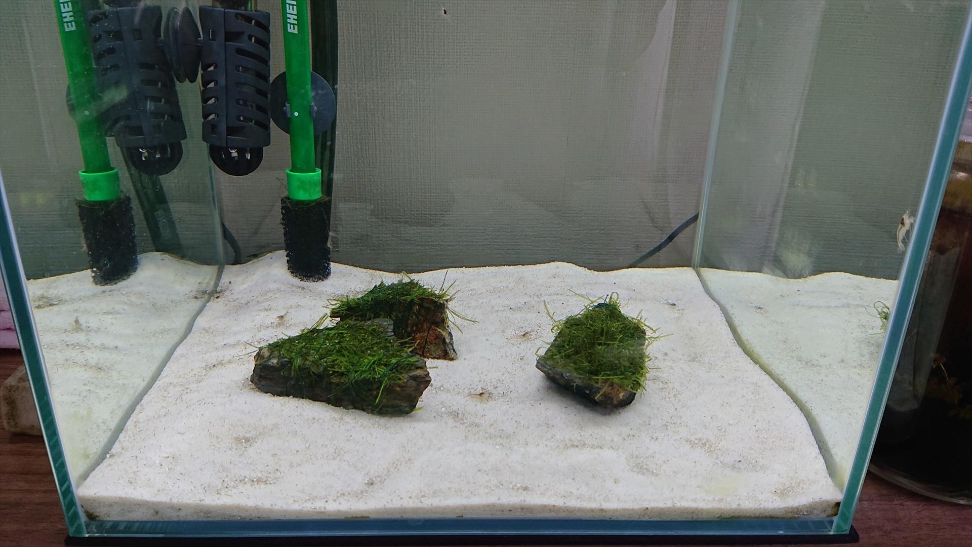 30キューブ水槽に侘び草を入れる前のレイアウト。
