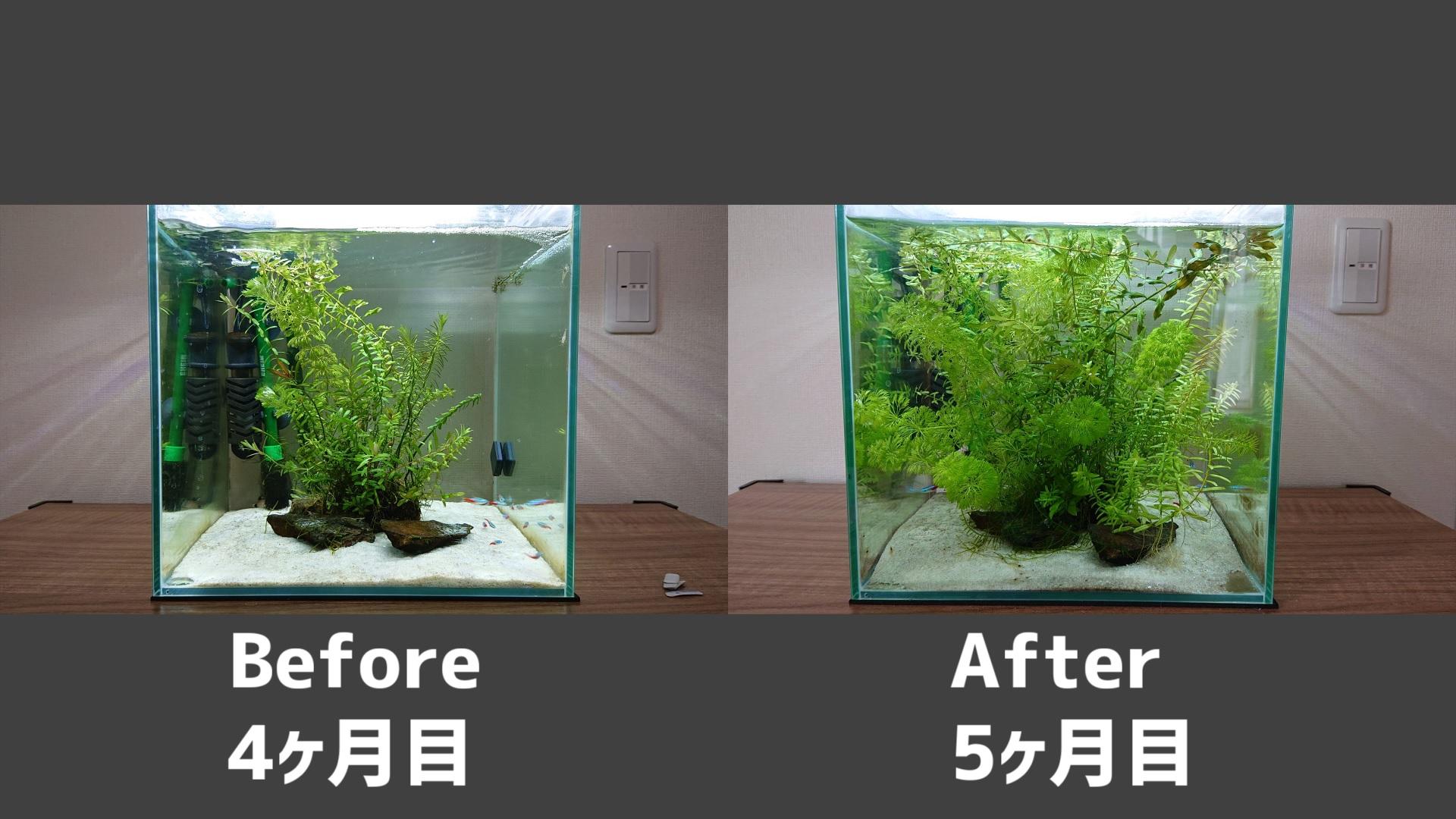 侘び草の4ヶ月目と7ヶ月目の写真比較。7ヶ月目は水草が大きく育った。