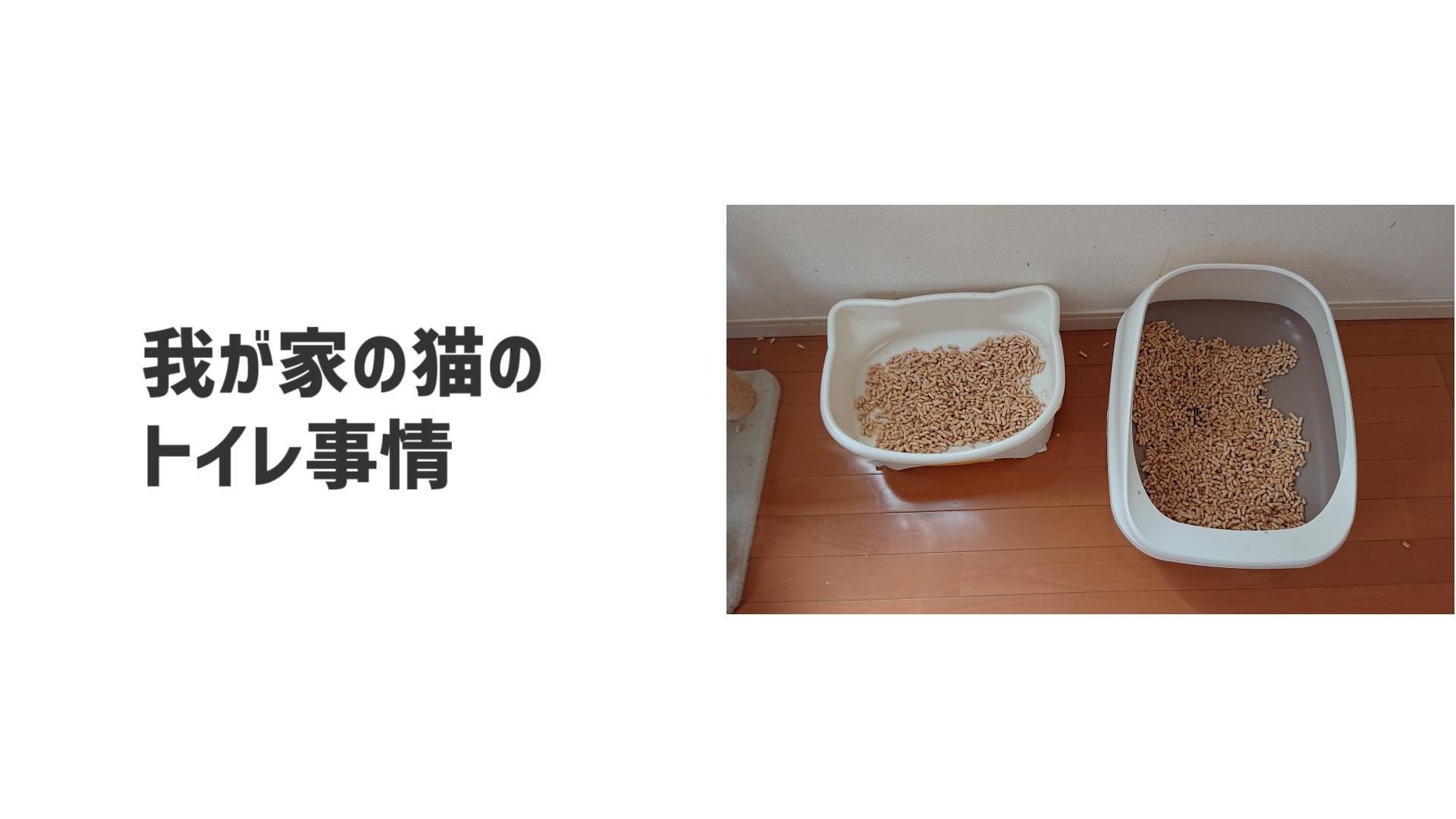 我が家の猫のトイレ事情【失敗談有り】